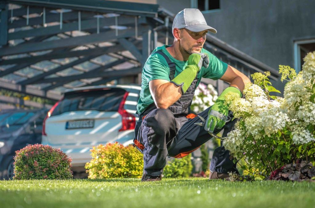 THE TOP REASONS TO INVEST IN COMMERCIAL LAWN SERVICES IN DALLAS