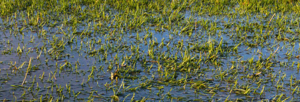 PROFESSIONAL TIPS TO PREVENT & CURE WATERLOGGED LAWNS