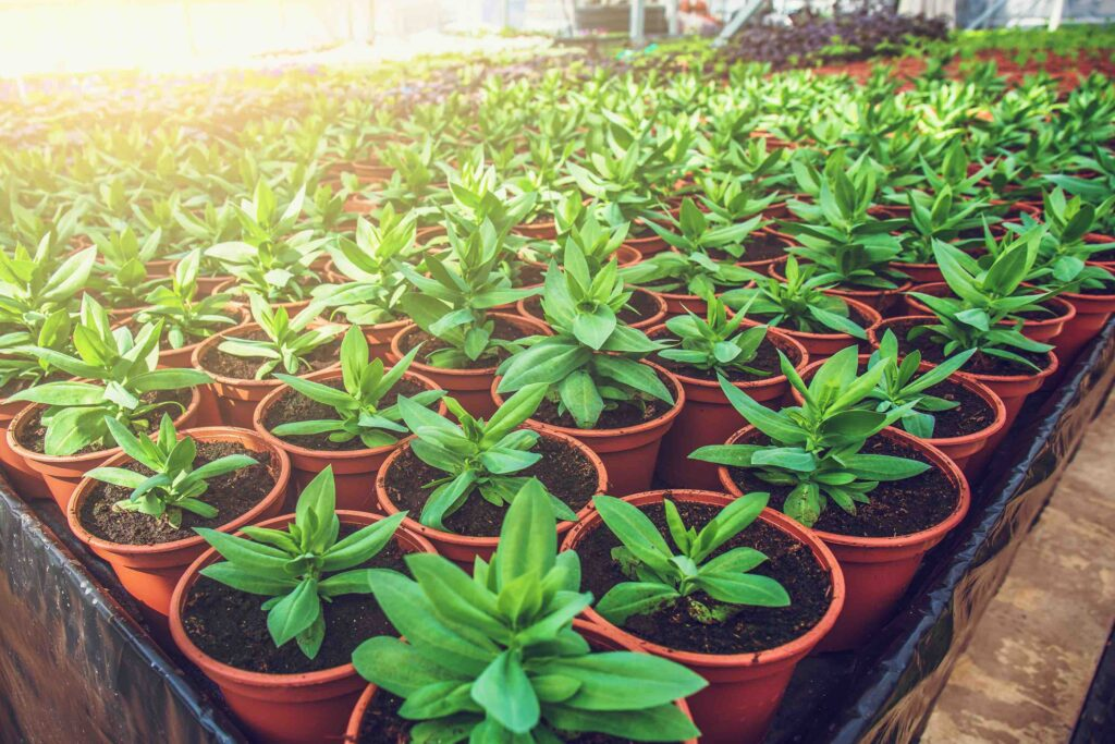 how to prepare for spring planting