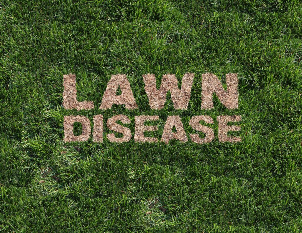 what can damage your lawn, lawn damage